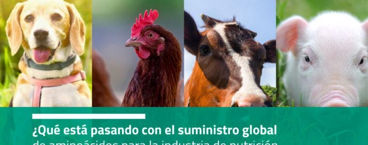 ¿Qué está pasando con el suministro global de aminoácidos para la industria de nutrición animal con la llegada del covid-19?