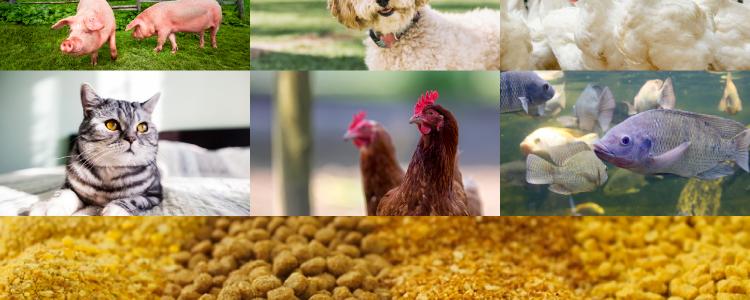 Estrategias para el control del crecimiento de hongos en alimentos para animales
