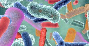 Read more about the article Probióticos: microorganismos vivos para la salud y producción animal